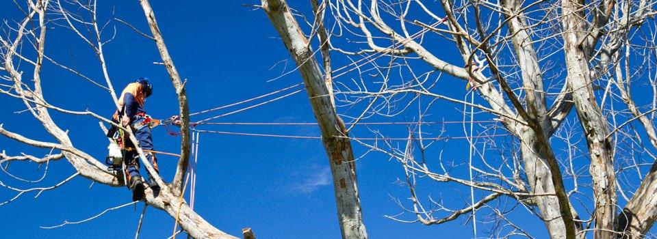 tree-surgery-by-arborist