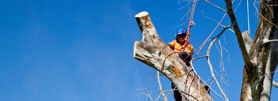 arborist-lopping-branch