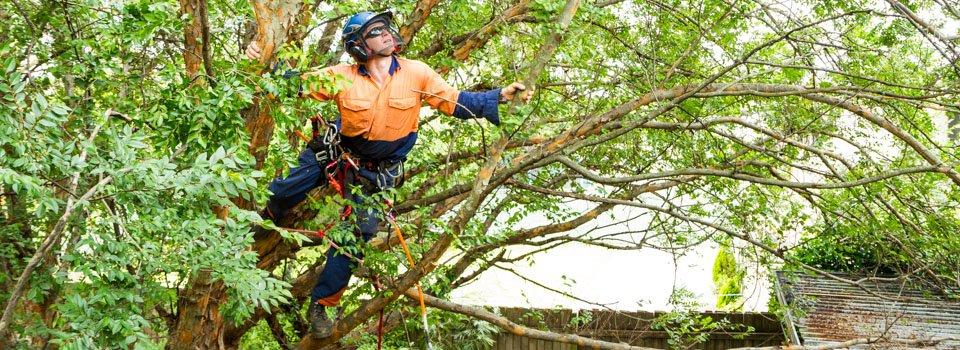 arborist-rigging