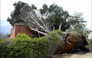 dangerous-tree