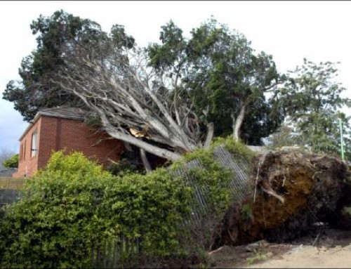 Home Insurance: Do I need to remove trees near my house?
