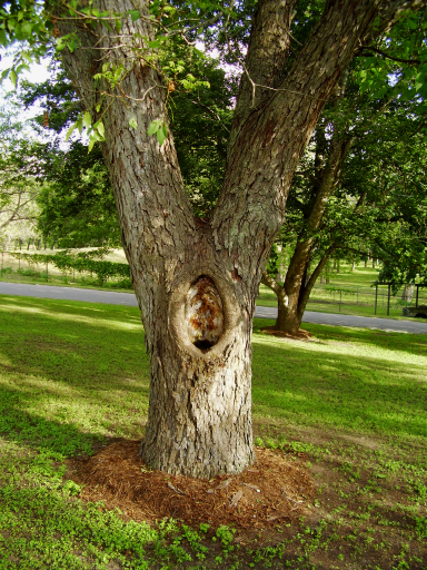 tree-with-hole-damage